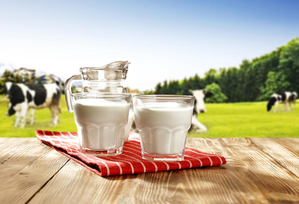 cows-milk-process